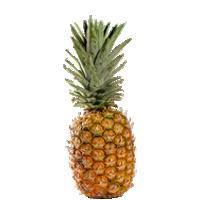 ananas-golden2