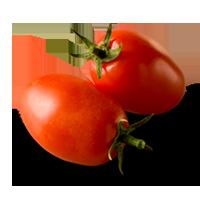 tomates-italiennes
