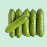concombres-libanais-2