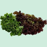 laitue-feuilles-vertes-et-rouges