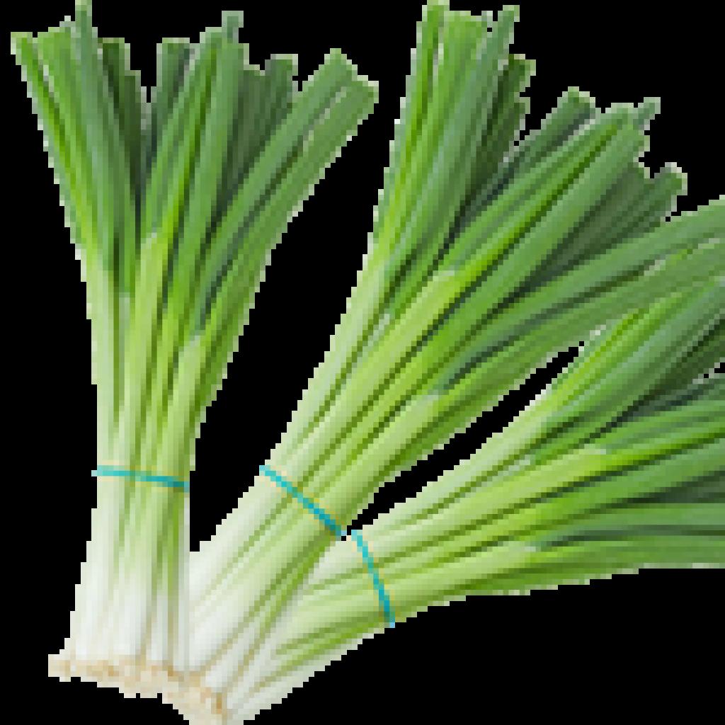 oignons-verts1
